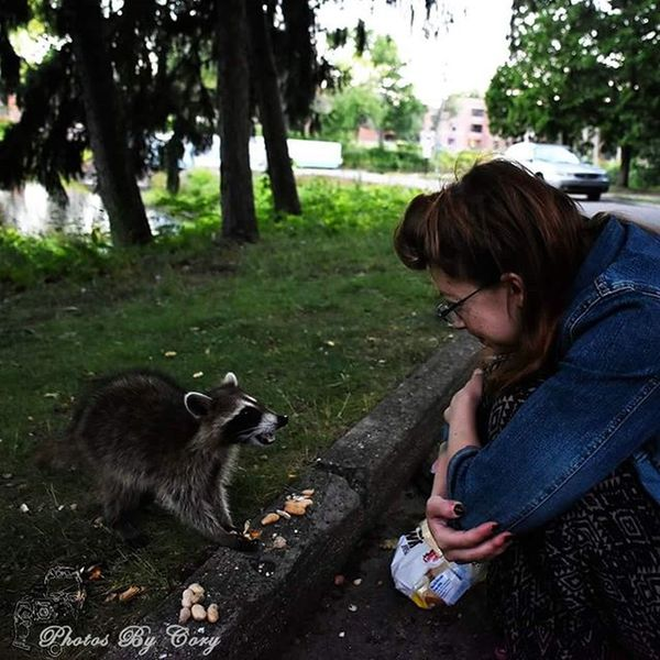 Brought my friend @rockstarfish007 with me to the park. Her and the raccoons became fast friends. Luckywiththeanimals Raccoon Raccoons Wildlife Animallover Wildlifephotography Wildlifepark Photooftheday Instadaily Instanature Natureshots Natureseeker Natureonly Natures_hub Natures_cuties Animallover Animal_captures Wildlife_perfection