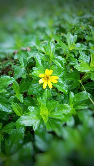 Flower Growth Fragility No People Close-up Flower Head Green Color Tinyflower Yellow Flower Backgroundblur Freshness