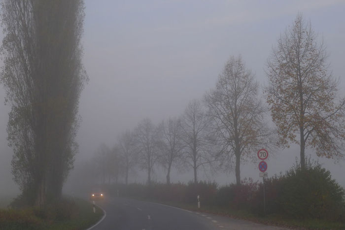 Dangerous traffic conditions Autumn EyeEm Nature Lover The Week On EyeEm Alley Bare Tree Beauty In Nature Branch Car Danger Day Fog My Point Of View Nature No People Outdoors Poor Visibility Road Road Sign Sky Spotlight Street Photography The Way Forward Transportation Tree