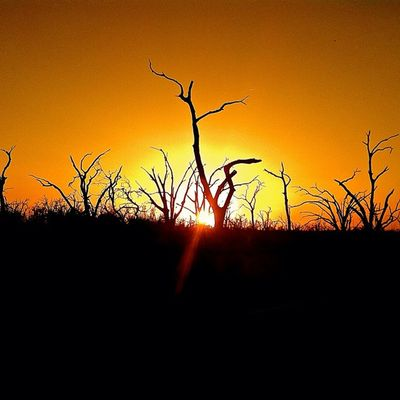 Sunset Nature Trees Woods Outdoors Forest Merica Marsh NOLA Louisiana Bayou South Swamp Neworleans Rsa_nature Udog_sky Sunsets_fx Rsa_sky Gulfcoast Deepsouth Trb_sunsets_fx Sunkissed_photos Oldsouth Onlylouisiana Louisianatravel Instagreenbr Rsa_orange We_shoot_louisiana Fiftyshades_sd