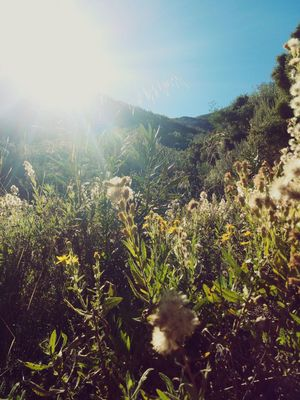 Naturaleza Southernspain Malaga Sun Flower Grass Mountain Nature Nature Growth Plant Outdoors Sunlight Day Sky Beauty In Nature No People Scenics Freshness Close-up