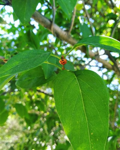 Tree Green Color Ladybug Leaf Flower Full Length Perching Butterfly - Insect Insect Close-up Animal Themes Plant Tiny Bug Beetle Branch Symbiotic Relationship