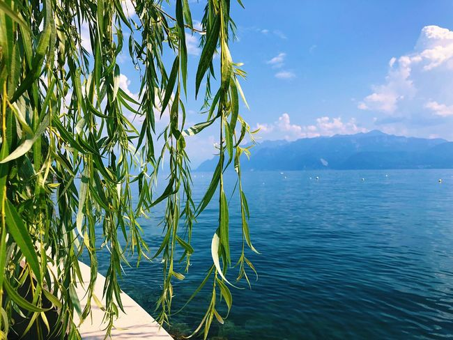 Mountain Lausanne Lac Léman EyeEmNewHere EyeEm Best Shots Switzerland Water Beauty In Nature Sky Plant Sea Tranquility Nature Scenics - Nature No People Day Tranquil Scene Growth Cloud - Sky Blue Tree Green Color Sunlight Outdoors Idyllic