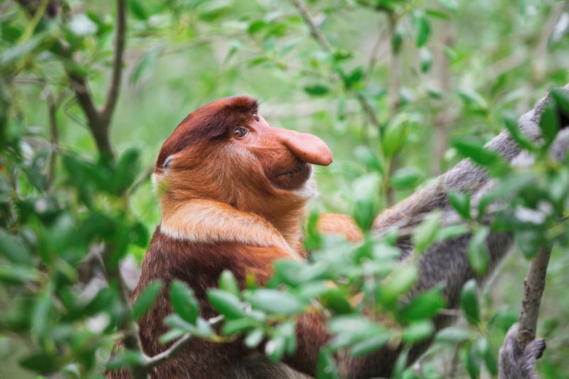 View of a squirrel on tree