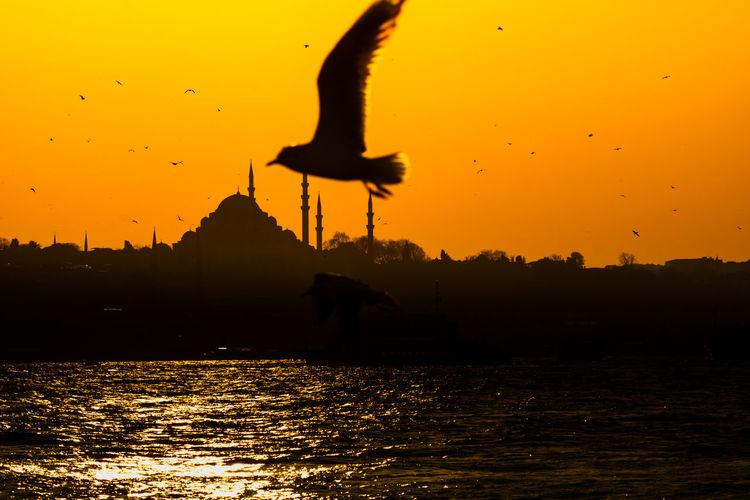 Silhouette birds flying over lake against orange sky