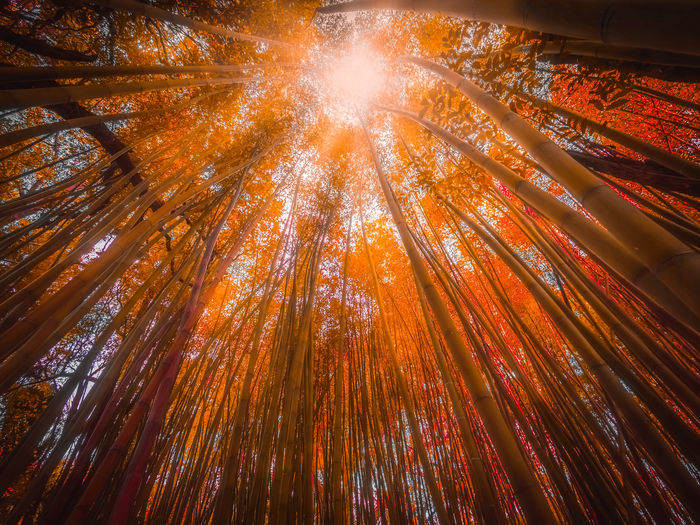 Low angle view of illuminated trees in forest against sky