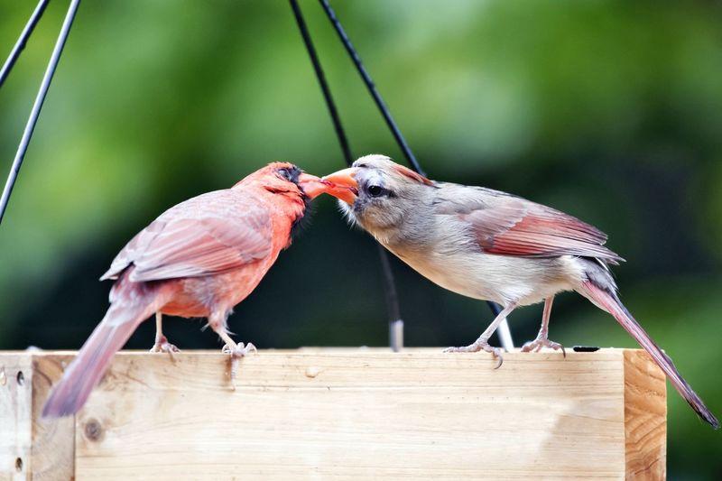 Exchanging Food