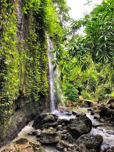 Bali Waterfall Flowing Water Water Nature Forest Beauty In Nature Scenics Motion Outdoors Long Exposure Tranquil Scene No People Tree Rock - Object Green Color Idyllic Lush Foliage River Tranquility Day