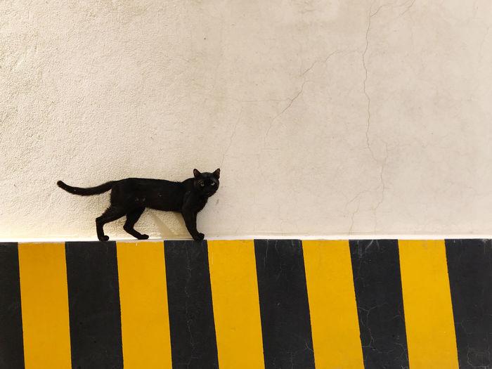 Black cat looking away on wall