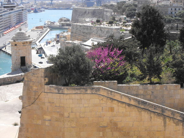 Port in Malta Architecture Building Exterior Built Structure Plant Tree City Nature High Angle View Building Water Day No People Outdoors Residential District Sunlight Roof Town Wall Growth Cityscape Malta Fortress Port Valetta Garden