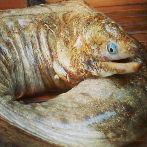 Throwback Panangitan Eel