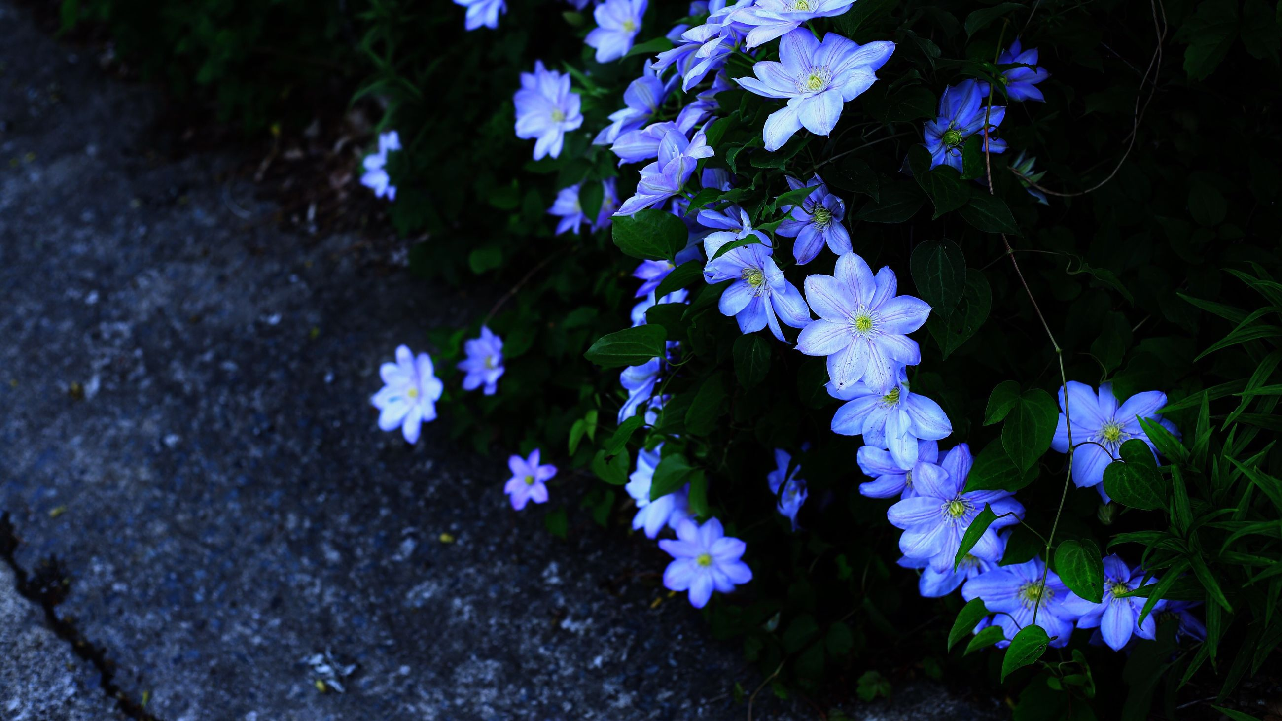 flower, fragility, nature, growth, beauty in nature, petal, freshness, plant, purple, outdoors, day, flower head, blooming, no people, close-up