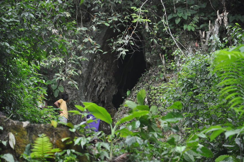 Cave entrance in Maitum Sarangani, Philippines. Botany Depth Of Field Focus On Background Fragility Freshness Green Green Color Growing Leaf Nature No People Plant Selective Focus Summer Tropical Climate
