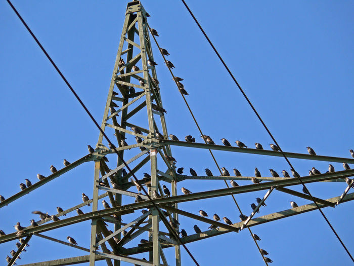 Low angle view of birds perching on metallic electricity pylon against sky