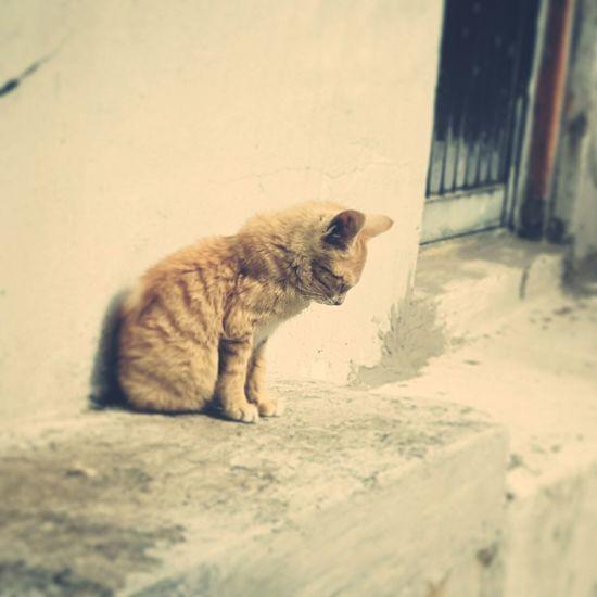 감천문화마을 Relaxing Hi! Cat Lovers