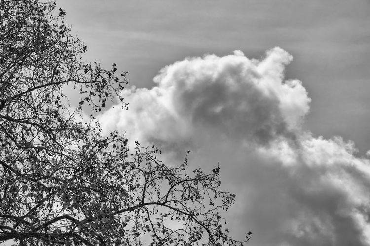 Low angle view of flowering tree against cloudy sky