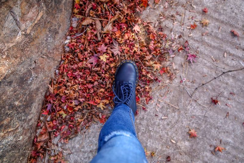 Autumn Low