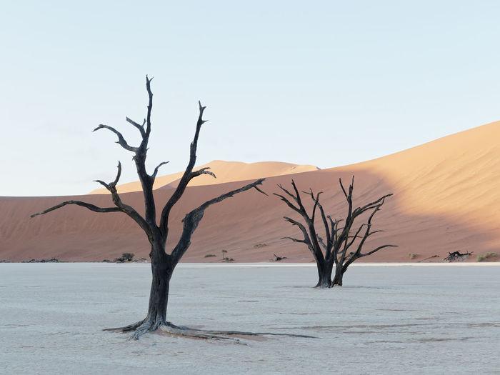 Bare tree in desert against clear sky