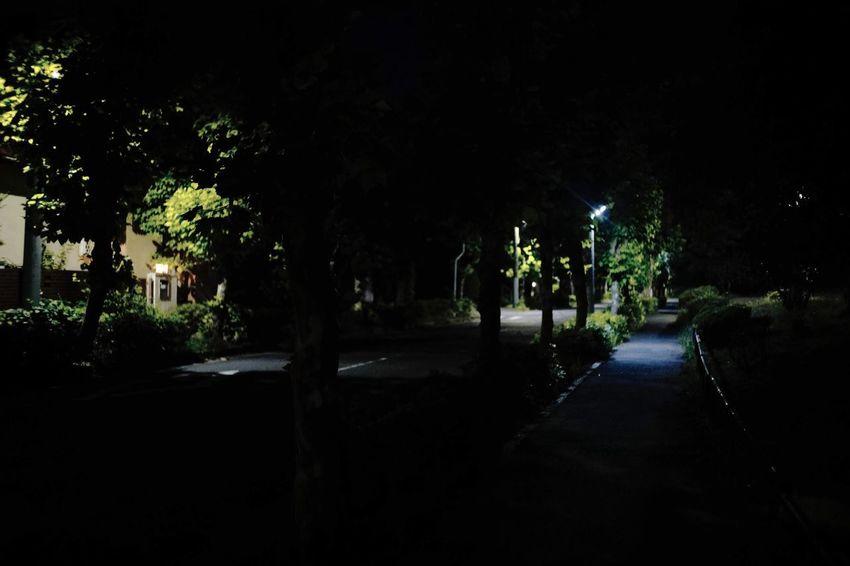 Tree Plant Night Illuminated Lighting Equipment Nature The Way Forward