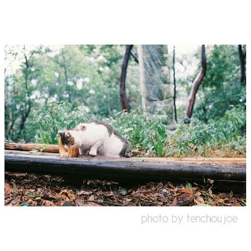 New photo - A trip to #Japan with #Nikon #Fm3a A random cat when I'm climbing the hill. Where do they come from? It's freezing and it's so high up! Artoftravel Tenchoujoe Street Fm3a Streetphotography Filmcamera Tokyo JP Kyoto Shootfilm Photography Film OSAKA Nikon Japan Photooftheday 35mm ASIA Nofilter Believeinfilm