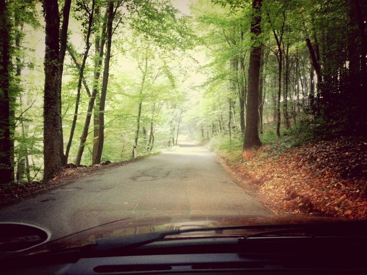 Car Driving Nature Work @work
