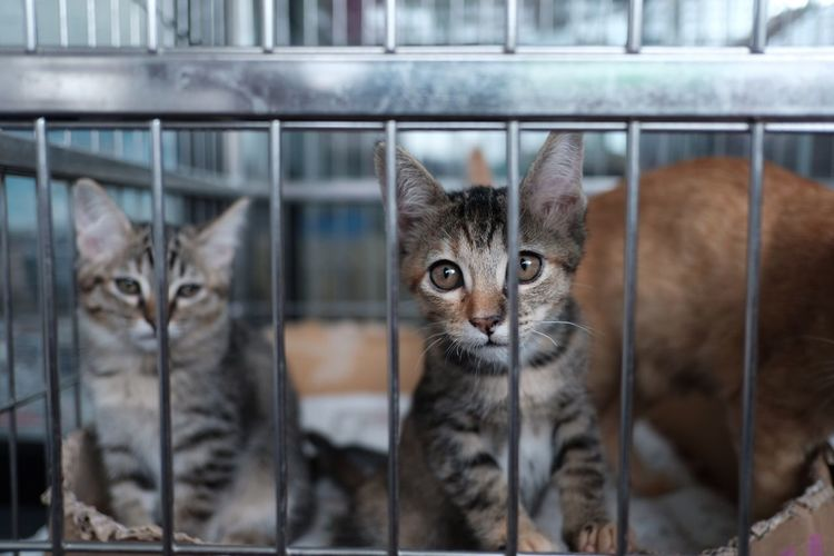 Cat icage Cage Veterinarian Veterinary EyeEm Selects Cat Feline Mammal Animal Themes Pets Domestic Animals Domestic No People Two Animals Portrait Focus On Foreground Looking At Camera Whisker Domestic Cat Kitten Looking Vertebrate Group Of Animals Young Animal Animal