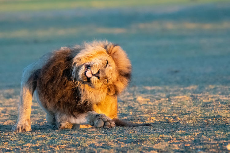 Dog looking away while sitting on land