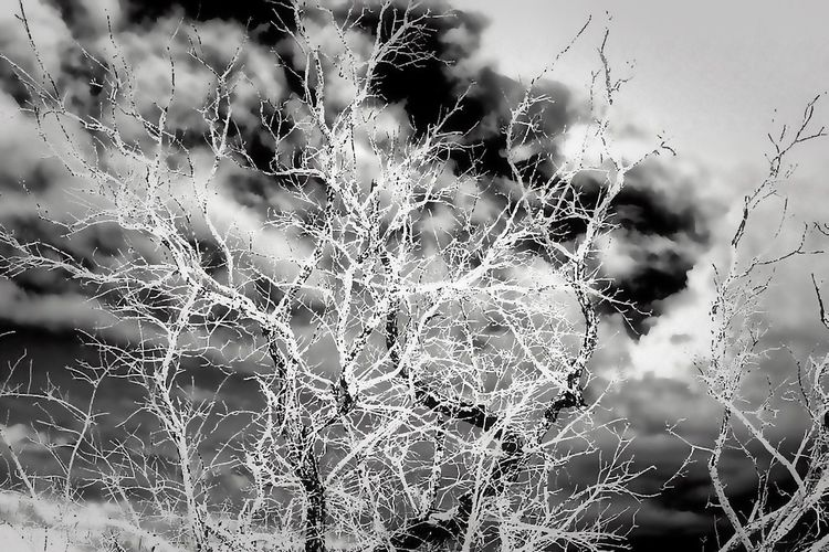In this impossibly complex photograph, a soft, passive sky becomes the backdrop to the static, almost electric treetop on a forgotten landscape of Managaha Island. While the colors of the branches of this driftwood pull lightness from the sky, the frenetic growth of branches brings anxiousness to an otherwise serene tableau. The tree growth fights for attention in defiance to the calm of the clouds Almost as if it knows its original purpose is over. Driftwood is wood washed ashore by wave, winds, and tides. Driftwood often is thought of as a nuisance. Fortunately for us, all this piece was not discarded and it continues it's repurposed life as a foundation for the sand dunes. Mañagaha is a small islet which lies off the west coast of Saipan within its lagoon in the Northern Mariana Islands. Although it has no permanent residents, Mañagaha is popular among Saipan's tourists as a day-trip destination due to its wide sandy beaches and a number of marine activities including snorkeling, parasailing, and jet skiing. Mañagaha hosts a colony of breeding Wedge-tailed Shearwaters. This seabird nests in burrows principally on the east side of the island. The island is historically significant for several reasons. It is the burial ground of the famous Carolinian Chief Aghurubw, who is said to have established the first Carolinian settlement in Saipan in 1815. A statue of the chief commemorates his achievements in leading his people from Satawal after a devastating typhoon to Saipan. The island also has remnants of Japanese fortifications from World War II. The entire island is listed on the United States National Register of Historic Places as a historic district. ,Palm Trees, ,sand Beach Life Beach Walk Cloudscape Driftwood Trellis On The Beach Driftwood In The Indifference Ocean Mañagaha Island Ocean, Ocean, Waves, Nature Saipan's Ashore Beach Beach Day Beachphotography Clouds And Sky Driftwood Abstractishness Driftwood Beach Illustration Lagoon Ocean, Beach, Nature, Calm, O