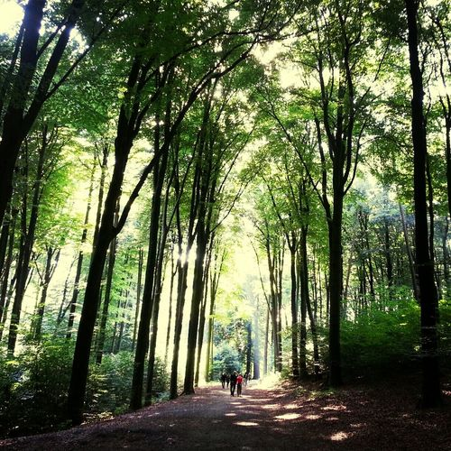 Sonsbeekpark Nature Tree Boom