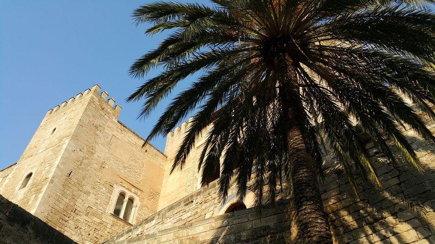 Mallorca❤️ Palma Catedral De Mallorca Low Angle View Ancient No People Architecture Sunlight