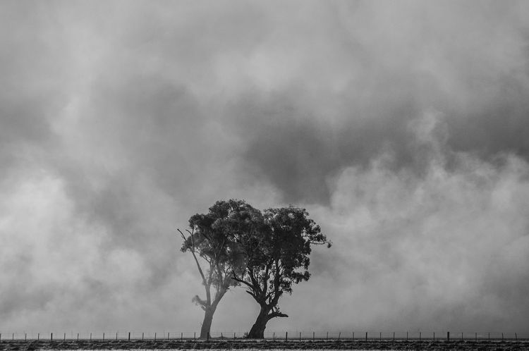 Grass burn off near Benalla Australia Beauty In Nature Black And White Landscape Burning Cloud - Sky Controlled Burn Fire Grass Fire Landscape Photography Nature Outdoors Sky Smoke Haze Sony Photography Tree Perspectives On Nature