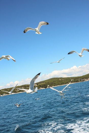 Seagulls flying over sea against clear blue sky