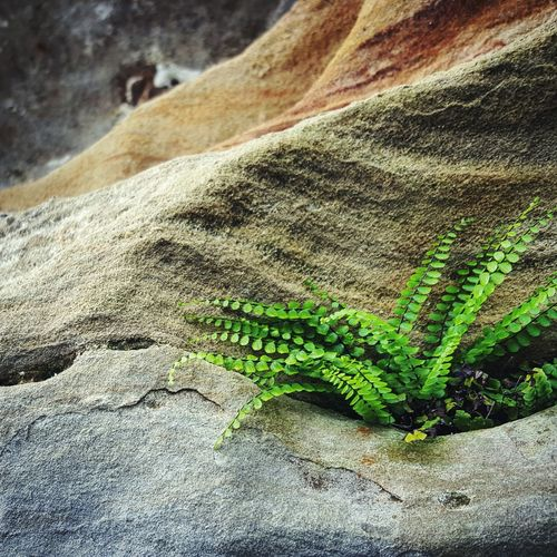 No People Nature Outdoors Sandstone Plant Beauty In Nature Persistance Resilience  Rock Stone Cliff Michigan, USA Fern Ferns Sand Day Textured  Green Color Close-up