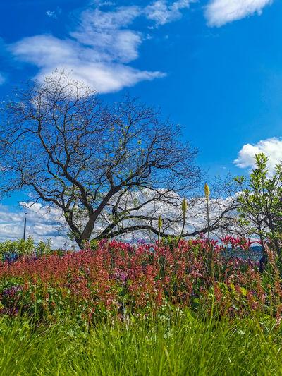 Flowering plants on field against blue sky