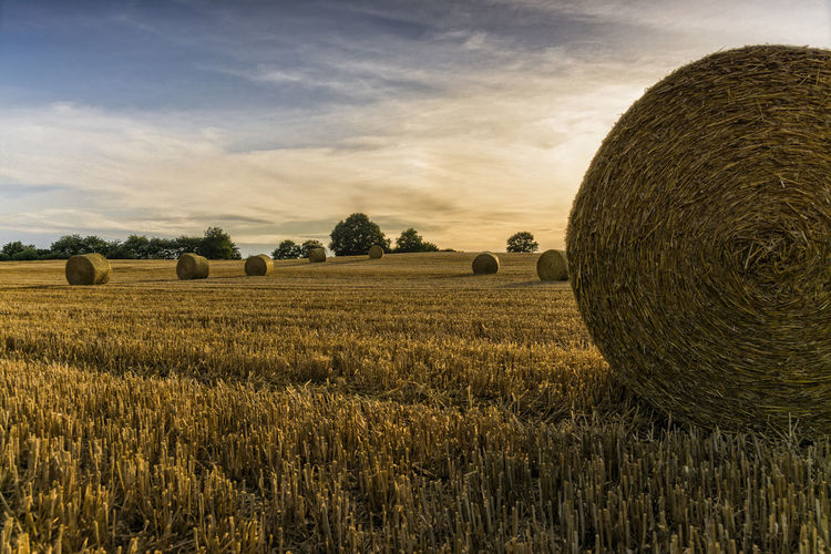 Straw bales Agriculture Bale  Cloud - Sky Day Farmland Field Hay Hay Bale Haystack Landscape Nature No People Outdoors Rural Scene Scenics Schleswig-Holstein Sky Straw Bales Sundown Tranquil Scene Tranquility Tree