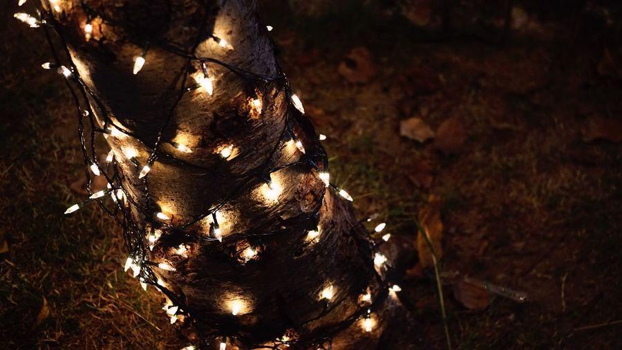 Need the.. Illuminated No People Night Lighting Equipment Christmas Lights Christmas Tree Christmas Nature Outdoors Christmas Light Winter