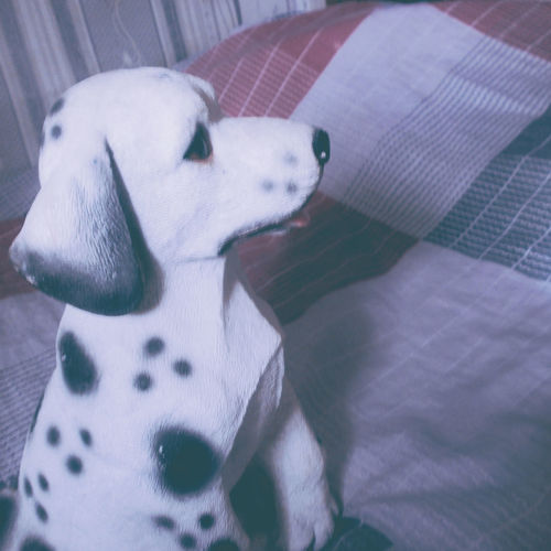 Animal Themes Bed Close-up Day Dog Domestic Animals In My Room Indoors  Indoors  Inside Lightroom Mammal No People One Animal Pets Snapseed Toy Toyphotography Toys VSCO VSCO Cam Vscocam Vscogood Vscogrid Vscophile