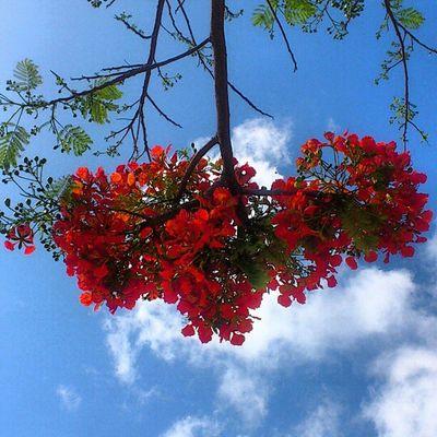 Flores no céu