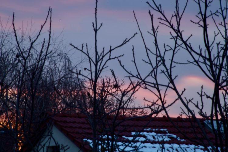 Pink Sky Tree