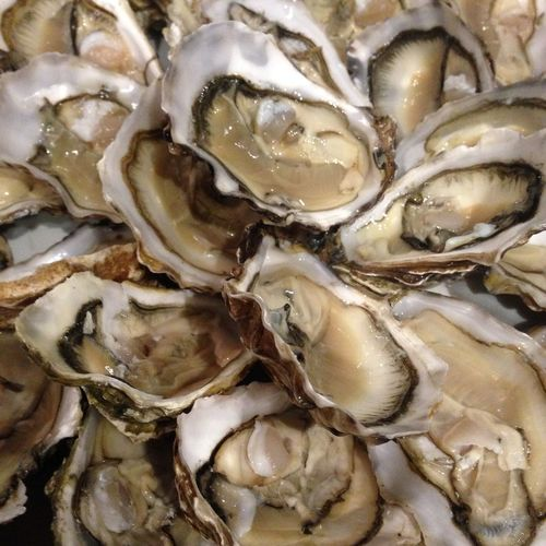 Oysters! Close-up Food Freshness Full Frame Indoors  Lifestyle Luxury No People Oyster  Oysters