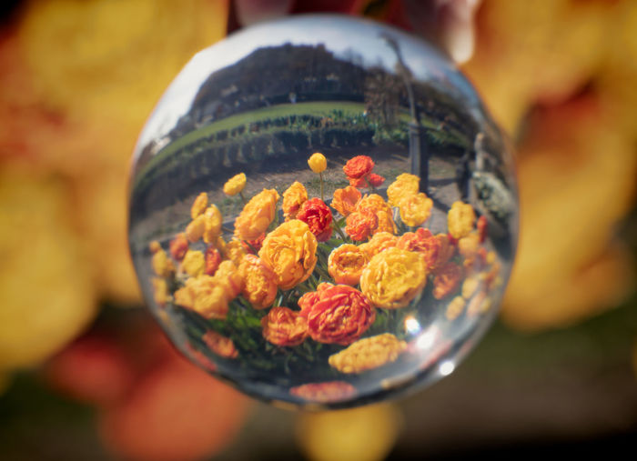 flowers through crystal ball Sphere Glass - Material Transparent Outdoors Focus On Foreground Nature Plant Close-up Crystal Ball Flower Flowering Plant Selective Focus Vulnerability  No People Beauty In Nature Fragility Decoration Freshness Art And Craft Food And Drink Spring
