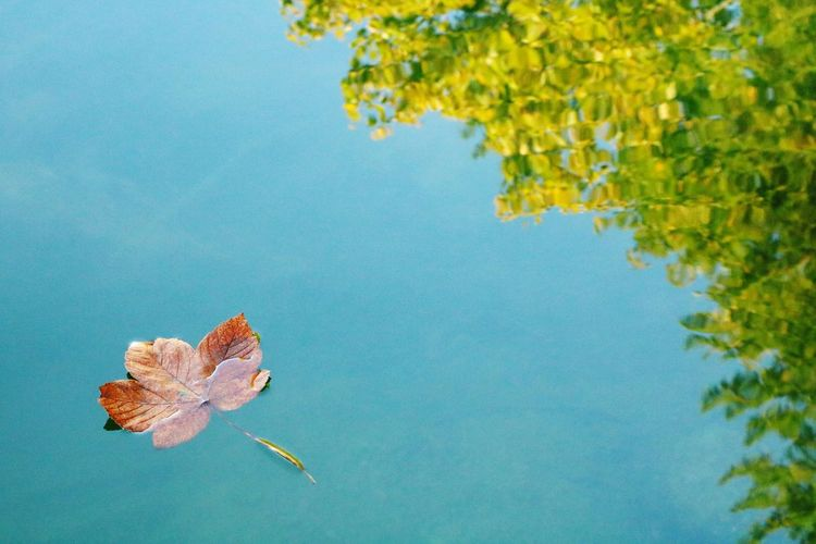 Summer vs Autumn Lake Plant Autumn Leaf Nature Tree Beauty In Nature Plant Part Water No People Day Blue Outdoors Close-up Sky Floating On Water Growth Fragility Tranquility