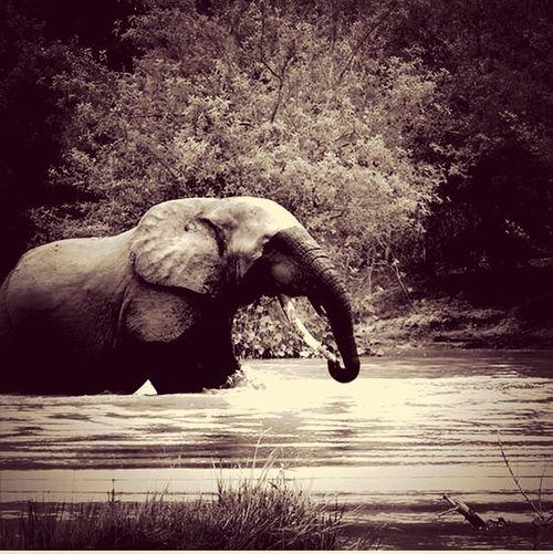 Ghana Elephant nature amazing Relaxing q