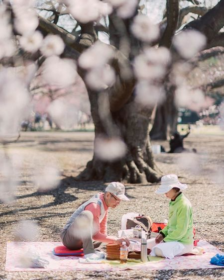 Ultimate Japan Streetphotography Urbanphotography Dividiary Ktraveljourney Travel Photography Travel Hanami Sakura2016 Tokyo