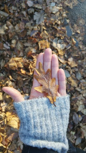 oak leaf in female hand Leaf Oak Leaf Female Hand Holding Orange Brown Dried Natural Pattern Natural Beauty Texture Autumn Fall Season  Change Human Hand Autumn Close-up Personal Perspective Human Finger Unrecognizable Person Low Section Palm person