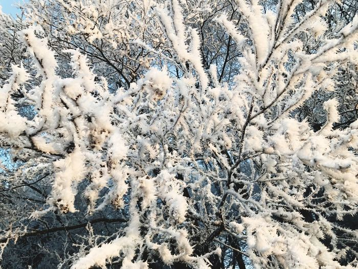 Winter Nature White Color Beauty In Nature Outdoors Tree Ice Frozen