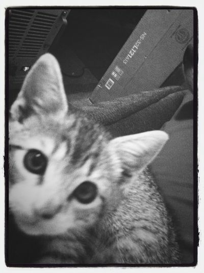 Kitten What