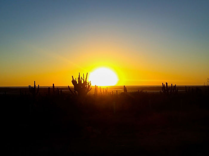Beautiful Cabo San Lucas Cactus Mexico Travel Beauty In Nature Clear Sky Growth Horizon Landscape Nature No People Orange Color Outdoors Restful Scenics Silhouette Sky Sun Sunbeam Sunlight Sunset Tranquil Scene Tranquility Vacation