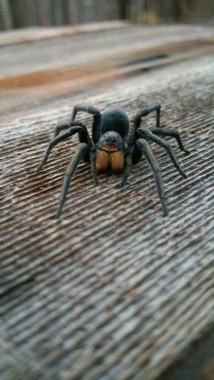 Spider Large Black Spider Spider Nature_collection Eyenaturelover Spider Close Up