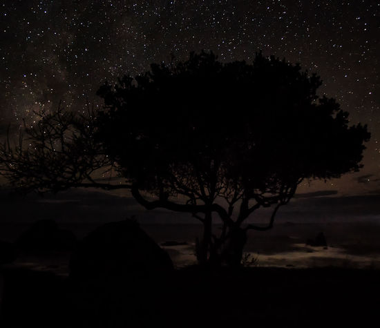 A tree, on a cliff, overlooking the ocean, under the stars at night. Astronomy Bare Tree Beauty In Nature Branch Clear Sky Growth Horizon Horizon Over Water Nature Night No People Ocean Ocean View Outdoors Rocky Scenics Sea Sea And Sky Silhouette Sky Star - Space Tranquil Scene Tranquility Tree
